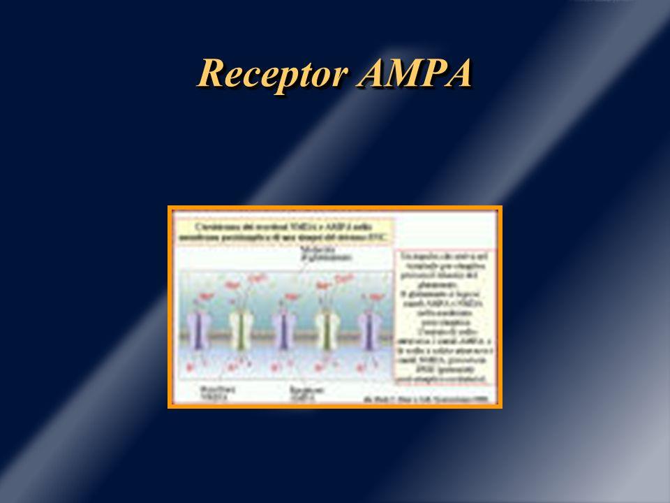 Receptor AMPA