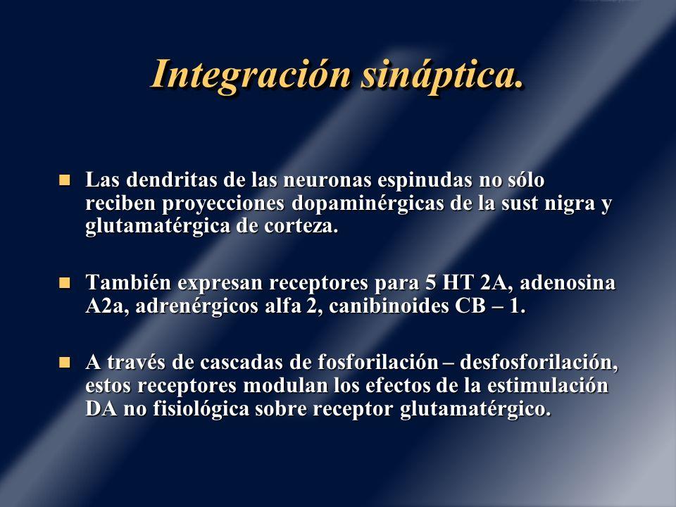 Integración sináptica. Las dendritas de las neuronas espinudas no sólo reciben proyecciones dopaminérgicas de la sust nigra y glutamatérgica de cortez