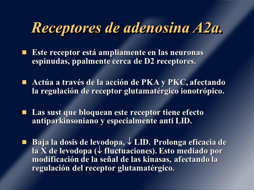 Receptores de adenosina A2a. Este receptor está ampliamente en las neuronas espinudas, ppalmente cerca de D2 receptores. Este receptor está ampliament