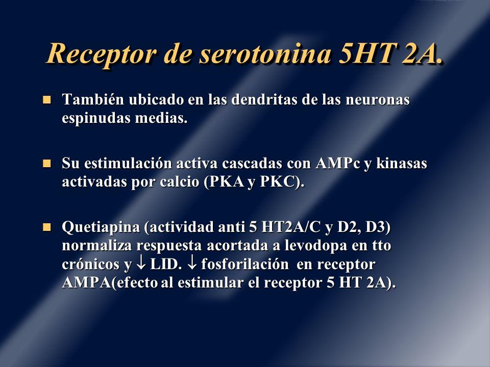 Receptor de serotonina 5HT 2A. También ubicado en las dendritas de las neuronas espinudas medias. También ubicado en las dendritas de las neuronas esp