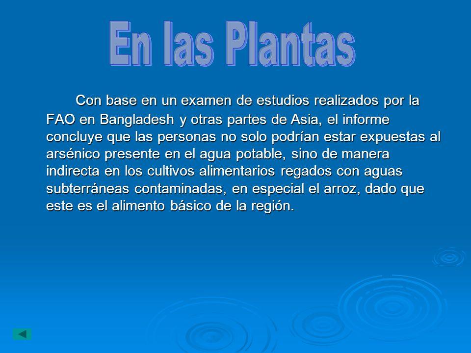 Con base en un examen de estudios realizados por la FAO en Bangladesh y otras partes de Asia, el informe concluye que las personas no solo podrían est