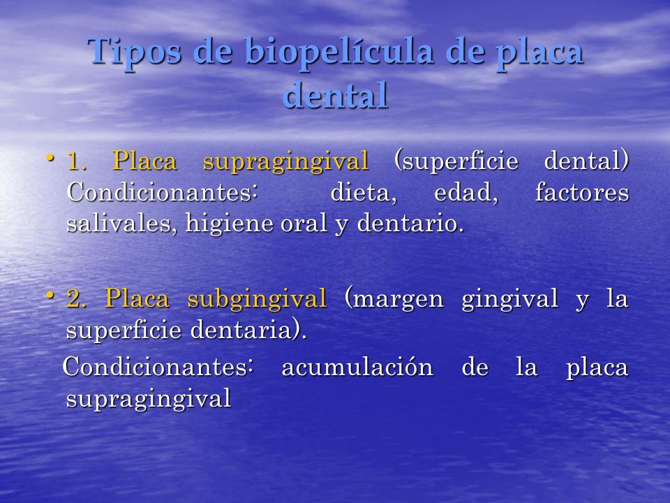 Tipos de biopelícula de placa dental 1. Placa supragingival (superficie dental) Condicionantes: dieta, edad, factores salivales, higiene oral y dentar