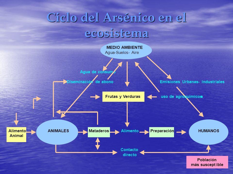 Ciclo del Arsénico en el ecosistema MEDIO AMBIENTE Agua-Suelos- Aire Agua de consumo Diseminación de abono Emisiones Urbanas- Industriales Frutas y Ve