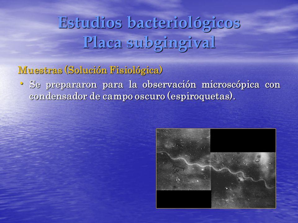 Estudios bacteriológicos Placa subgingival Muestras (Solución Fisiológica) Se prepararon para la observación microscópica con condensador de campo osc