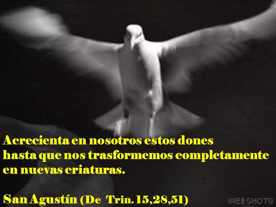 Acrecienta en nosotros estos dones hasta que nos trasformemos completamente en nuevas criaturas. San Agustín (De Trin. 15,28,51)