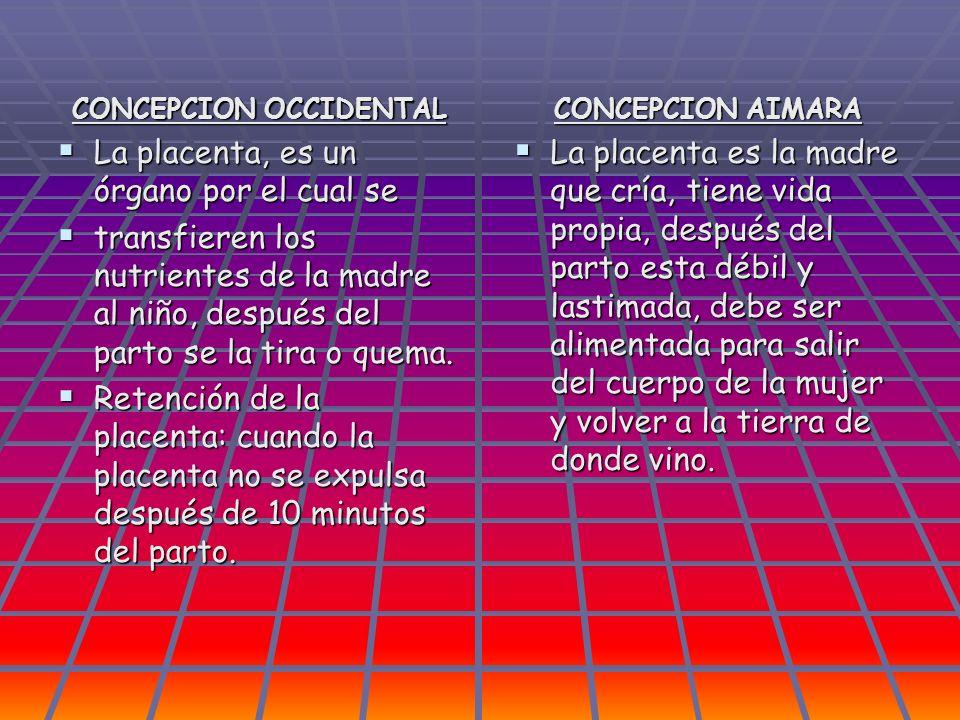 CONCEPCION OCCIDENTAL La placenta, es un órgano por el cual se La placenta, es un órgano por el cual se transfieren los nutrientes de la madre al niño