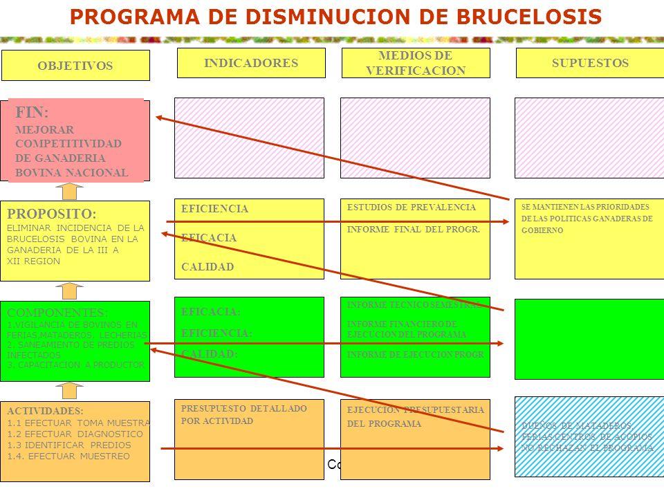 Pamela Vera S. Consultora ILPES49 PROGRAMA DE DISMINUCION DE BRUCELOSIS PROPOSITO: ELIMINAR INCIDENCIA DE LA BRUCELOSIS BOVINA EN LA GANADERIA DE LA I