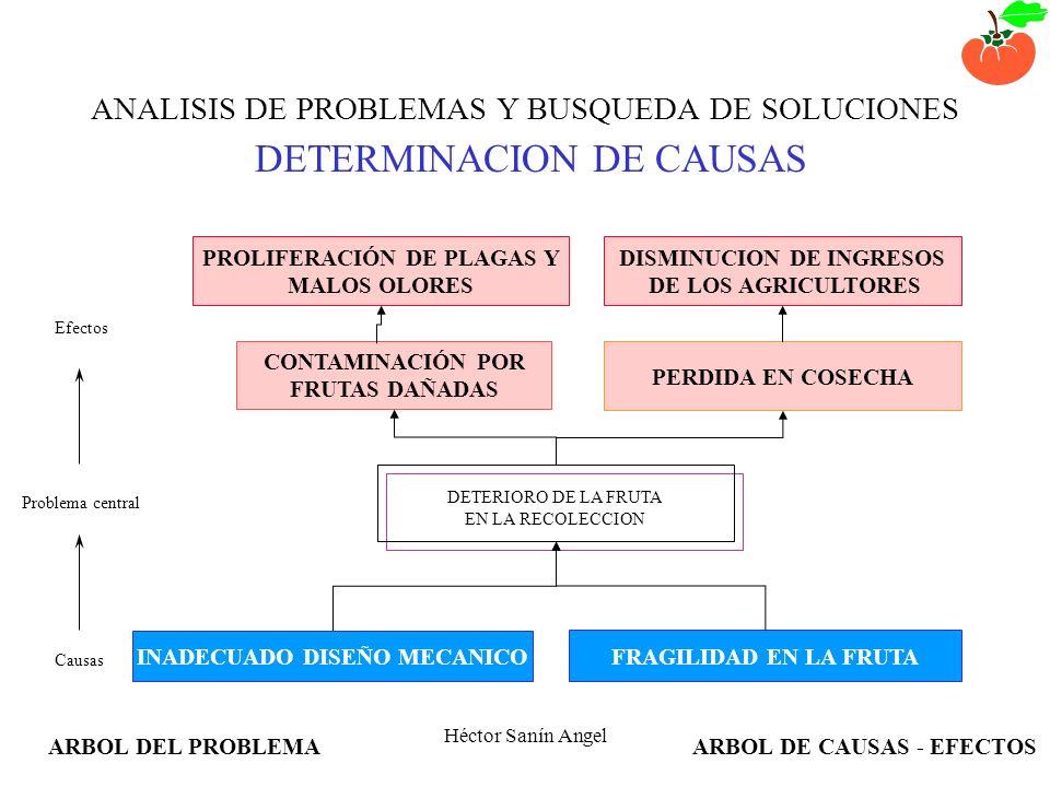 Héctor Sanín Angel ANALISIS DE PROBLEMAS Y BUSQUEDA DE SOLUCIONES EXPLORACION Y VERIFICACION DE EFECTOS Problema central DETERIORO DE LA FRUTA EN LA R