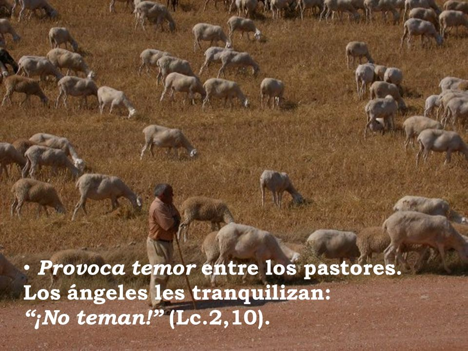 Provoca temor entre los pastores. Los ángeles les tranquilizan: ¡No teman! (Lc.2,10).