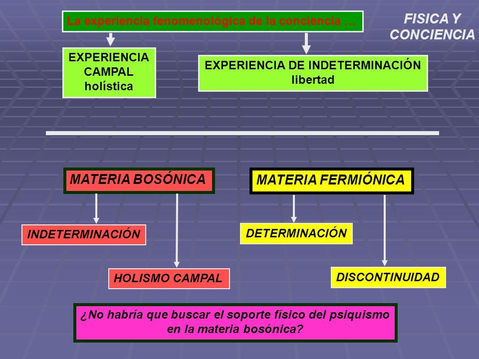MATERIA BOSÓNICA MATERIA FERMIÓNICA La experiencia fenomenológica de la conciencia … EXPERIENCIA CAMPAL holística EXPERIENCIA DE INDETERMINACIÓN liber