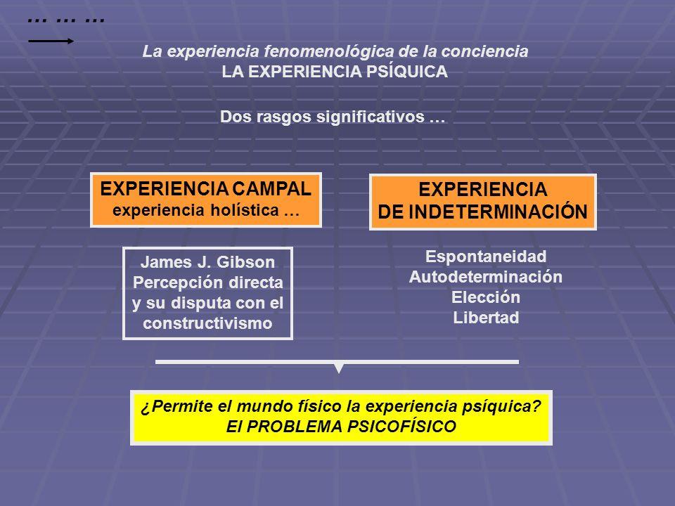 La experiencia fenomenológica de la conciencia LA EXPERIENCIA PSÍQUICA Dos rasgos significativos … EXPERIENCIA CAMPAL experiencia holística … EXPERIEN