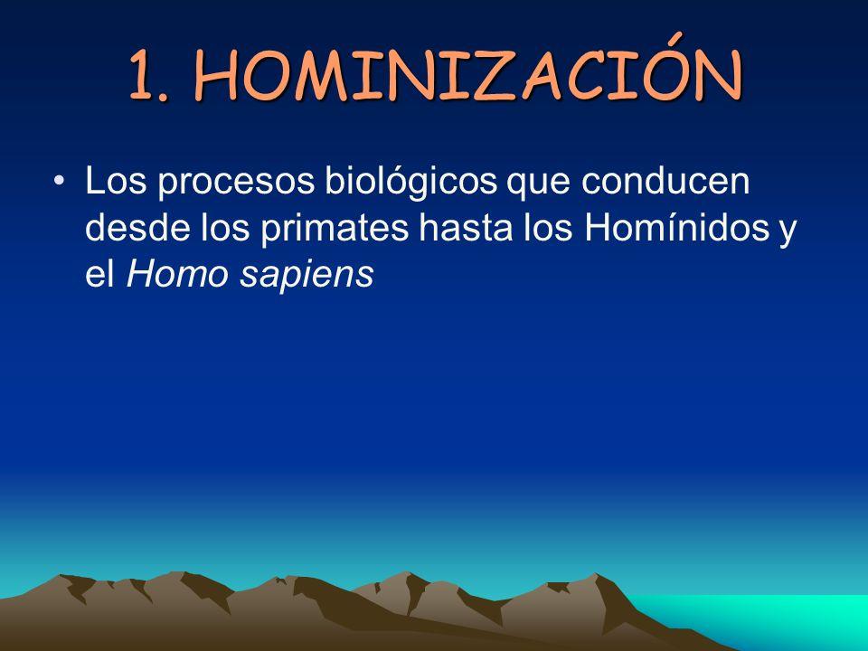 1. HOMINIZACIÓN Los procesos biológicos que conducen desde los primates hasta los Homínidos y el Homo sapiens