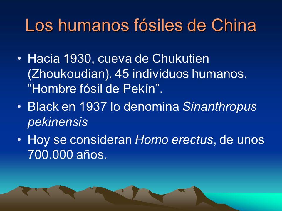 Los humanos fósiles de China Hacia 1930, cueva de Chukutien (Zhoukoudian). 45 individuos humanos. Hombre fósil de Pekín. Black en 1937 lo denomina Sin