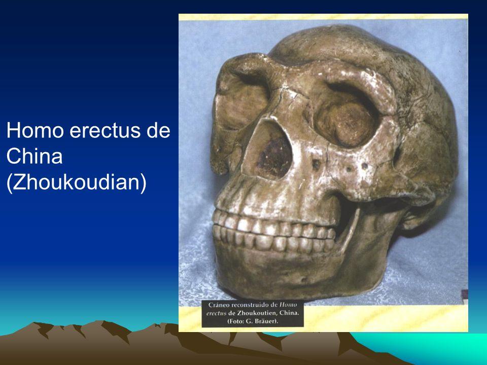Homo erectus de China (Zhoukoudian)