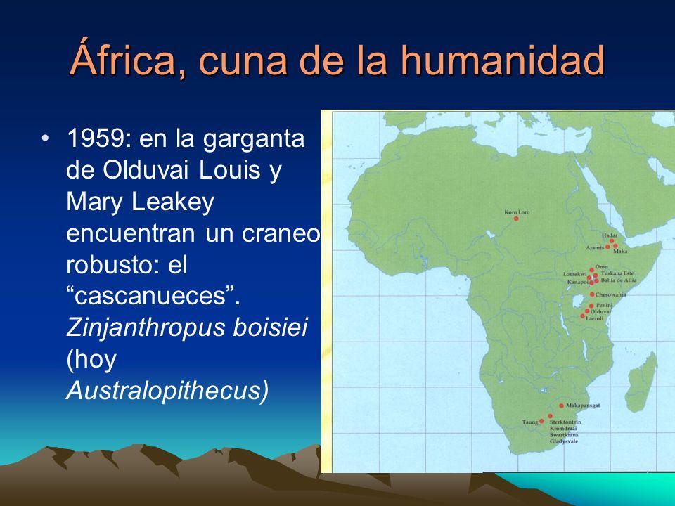 África, cuna de la humanidad 1959: en la garganta de Olduvai Louis y Mary Leakey encuentran un craneo robusto: el cascanueces. Zinjanthropus boisiei (