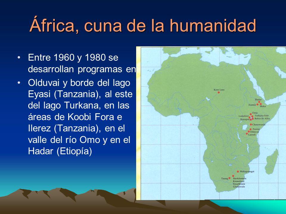 África, cuna de la humanidad Entre 1960 y 1980 se desarrollan programas en Olduvai y borde del lago Eyasi (Tanzania), al este del lago Turkana, en las