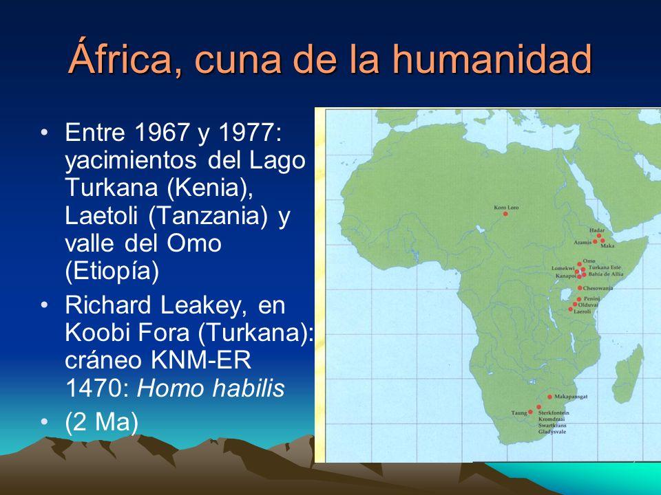 África, cuna de la humanidad Entre 1967 y 1977: yacimientos del Lago Turkana (Kenia), Laetoli (Tanzania) y valle del Omo (Etiopía) Richard Leakey, en