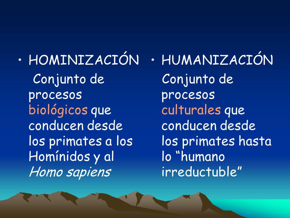 ANTROPOGÉNESIS HOMINIZACIÓN Conjunto de procesos biológicos que conducen desde los primates a los Homínidos y al Homo sapiens HUMANIZACIÓN Conjunto de procesos culturales que conducen desde los primates hasta lo humano irreductuble