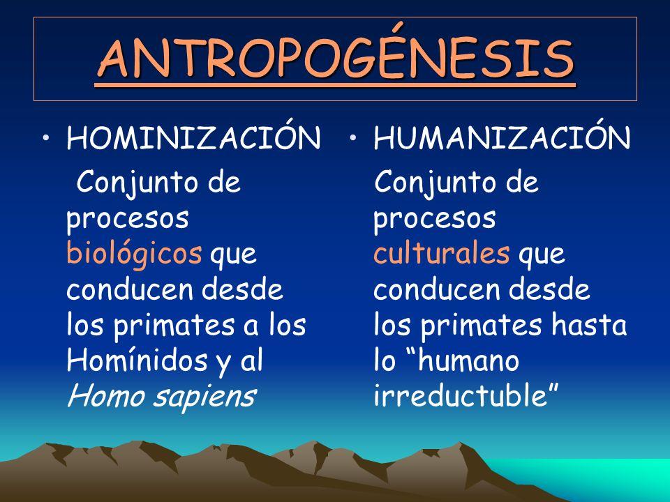 ANTROPOGÉNESIS HOMINIZACIÓN Conjunto de procesos biológicos que conducen desde los primates a los Homínidos y al Homo sapiens HUMANIZACIÓN Conjunto de