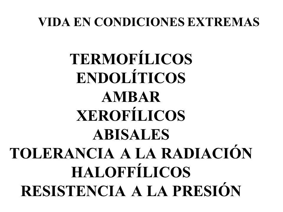 TERMOFÍLICOS ENDOLÍTICOS AMBAR XEROFÍLICOS ABISALES TOLERANCIA A LA RADIACIÓN HALOFFÍLICOS RESISTENCIA A LA PRESIÓN VIDA EN CONDICIONES EXTREMAS