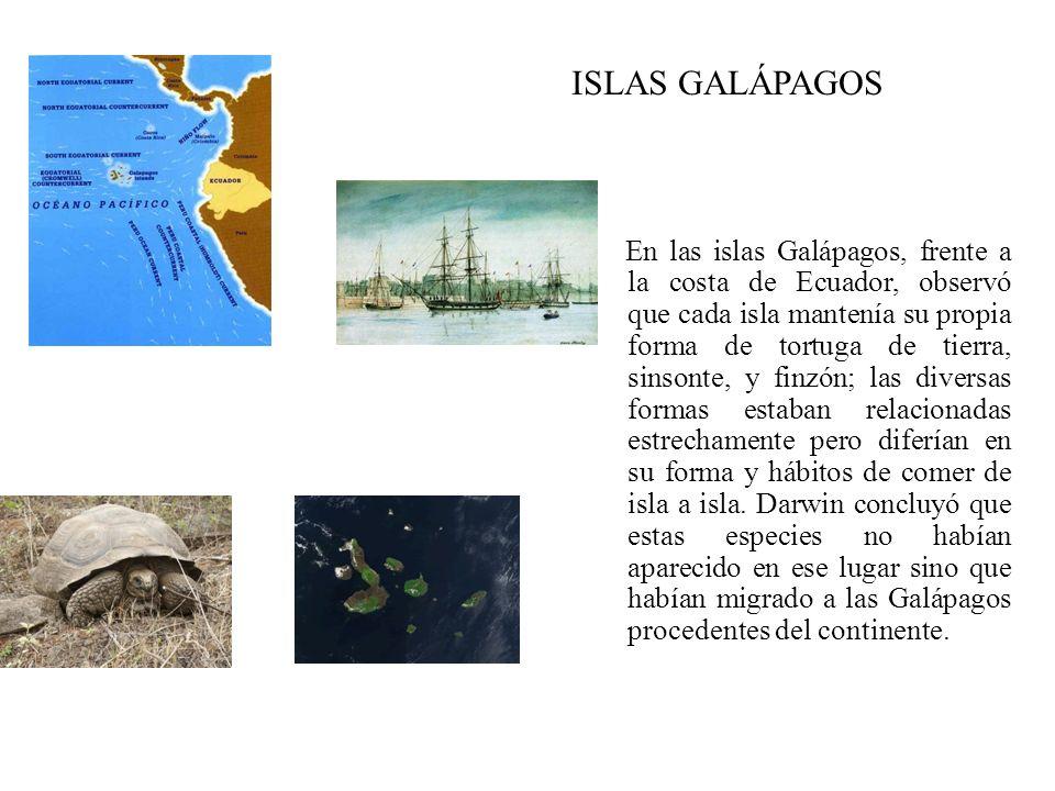 En las islas Galápagos, frente a la costa de Ecuador, observó que cada isla mantenía su propia forma de tortuga de tierra, sinsonte, y finzón; las div