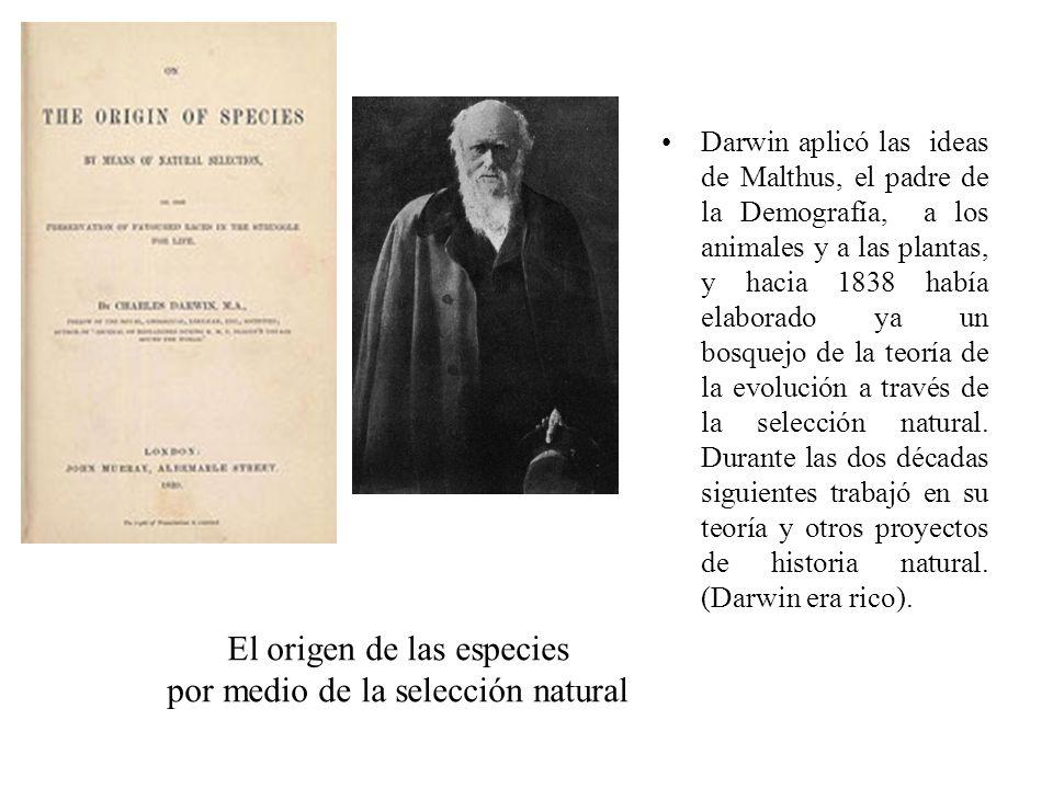 El origen de las especies por medio de la selección natural Darwin aplicó las ideas de Malthus, el padre de la Demografía, a los animales y a las plan