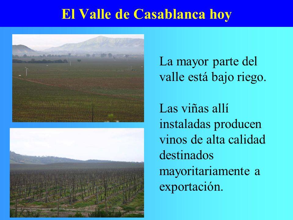 El Valle de Casablanca hoy La mayor parte del valle está bajo riego. Las viñas allí instaladas producen vinos de alta calidad destinados mayoritariame
