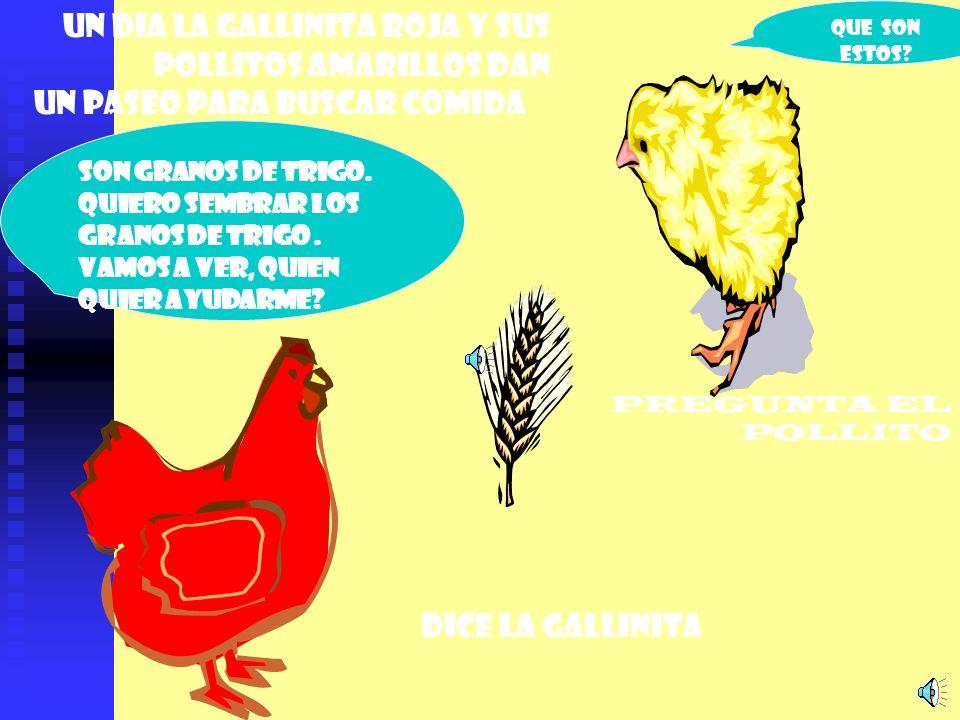 Un dia la gallinita roja y sus pollitos amarillos dan un paseo para buscar comida Que son estos.