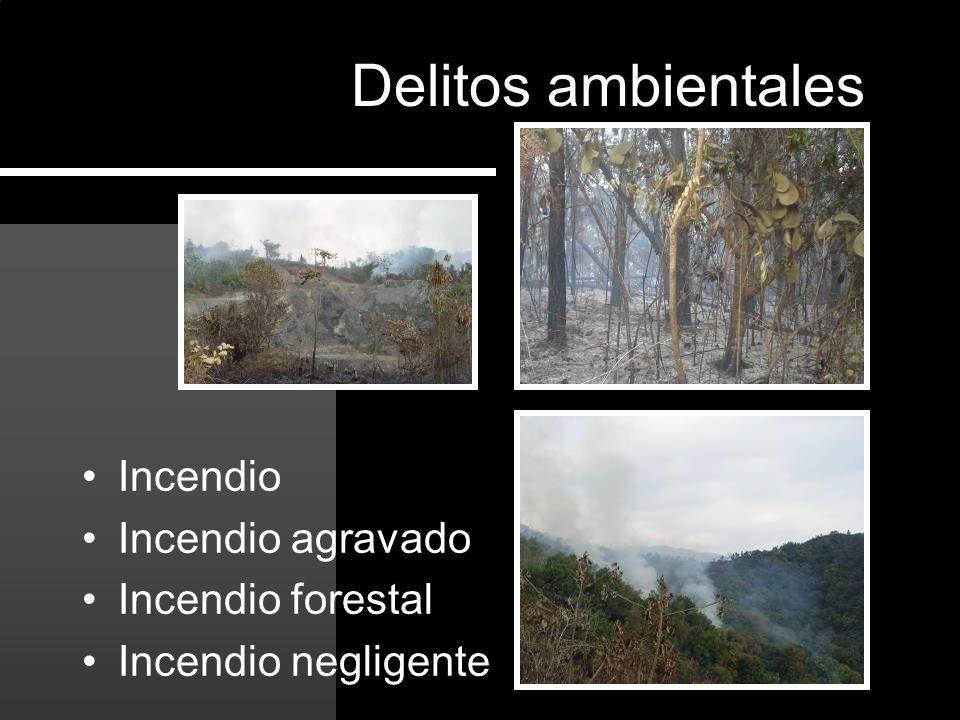 Incendio Incendio agravado Incendio forestal Incendio negligente Delitos ambientales