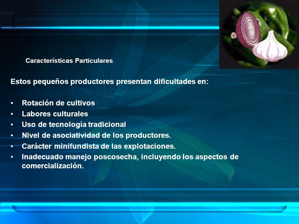 Características Particulares Estos pequeños productores presentan dificultades en: Rotación de cultivos Labores culturales Uso de tecnología tradicional Nivel de asociatividad de los productores.