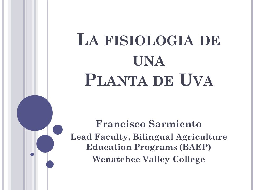 L A FISIOLOGIA DE UNA P LANTA DE U VA Francisco Sarmiento Lead Faculty, Bilingual Agriculture Education Programs (BAEP) Wenatchee Valley College