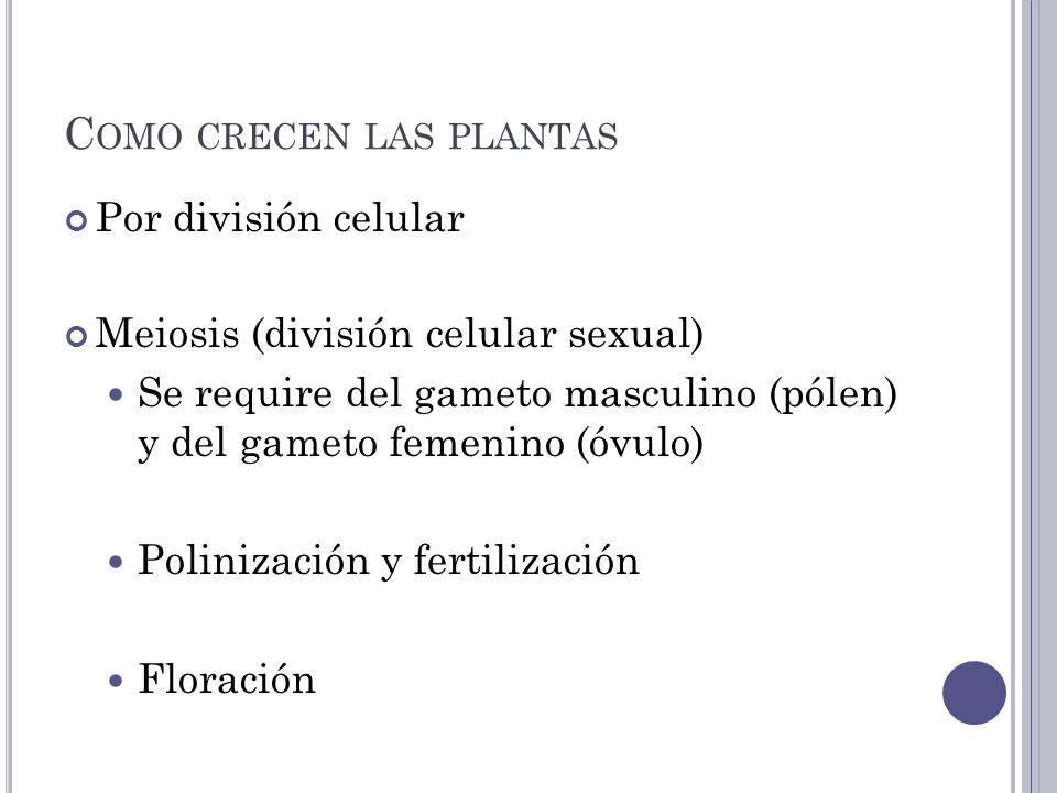 C OMO CRECEN LAS PLANTAS Por división celular Meiosis (división celular sexual) Se require del gameto masculino (pólen) y del gameto femenino (óvulo) Polinización y fertilización Floración