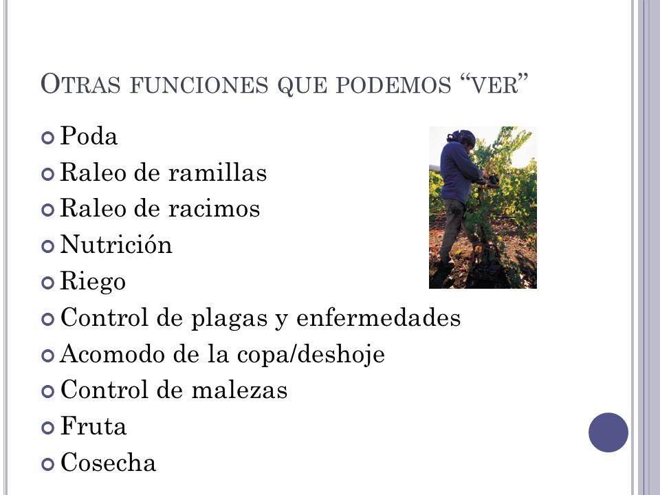 O TRAS FUNCIONES QUE PODEMOS VER Poda Raleo de ramillas Raleo de racimos Nutrición Riego Control de plagas y enfermedades Acomodo de la copa/deshoje Control de malezas Fruta Cosecha