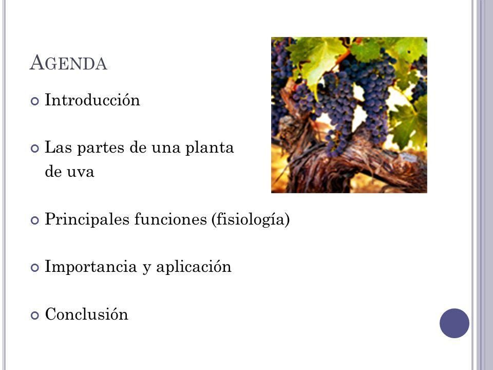 A GENDA Introducción Las partes de una planta de uva Principales funciones (fisiología) Importancia y aplicación Conclusión