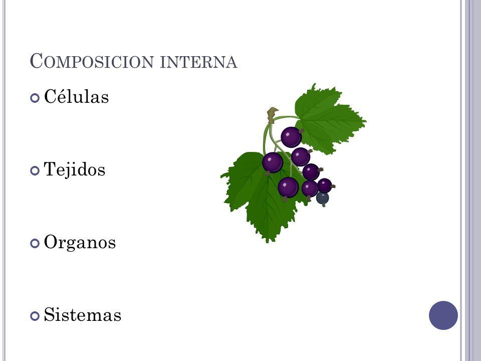 C OMPOSICION INTERNA Células Tejidos Organos Sistemas
