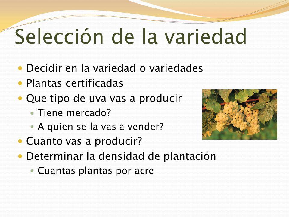 Selección de la variedad Decidir en la variedad o variedades Plantas certificadas Que tipo de uva vas a producir Tiene mercado? A quien se la vas a ve