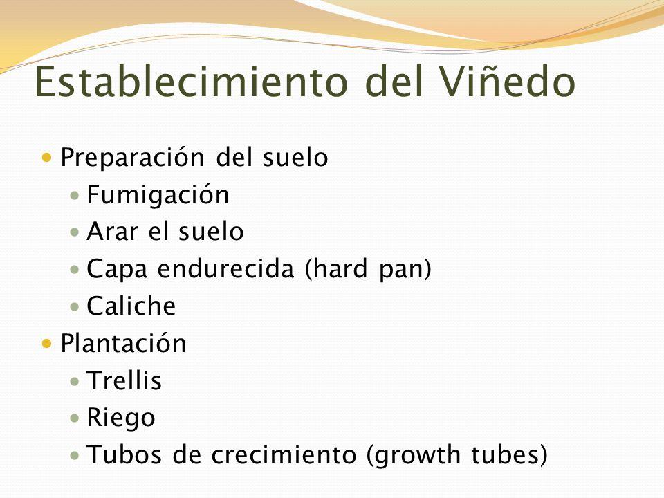Establecimiento del Viñedo Preparación del suelo Fumigación Arar el suelo Capa endurecida (hard pan) Caliche Plantación Trellis Riego Tubos de crecimi