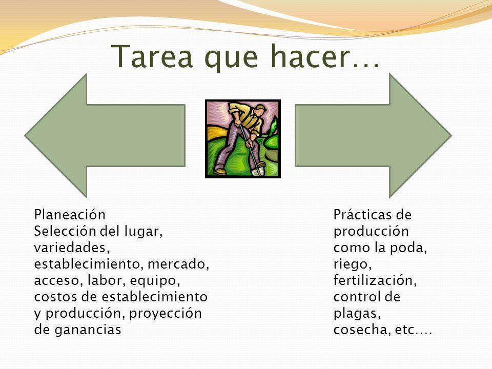Tarea que hacer… Planeación Selección del lugar, variedades, establecimiento, mercado, acceso, labor, equipo, costos de establecimiento y producción,
