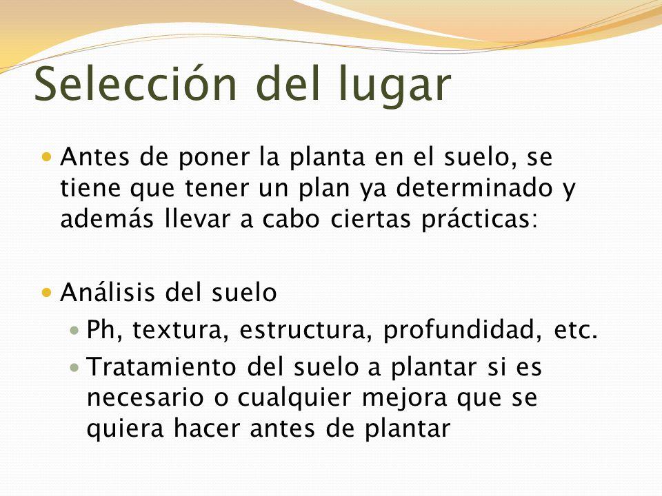 Selección del lugar Antes de poner la planta en el suelo, se tiene que tener un plan ya determinado y además llevar a cabo ciertas prácticas: Análisis