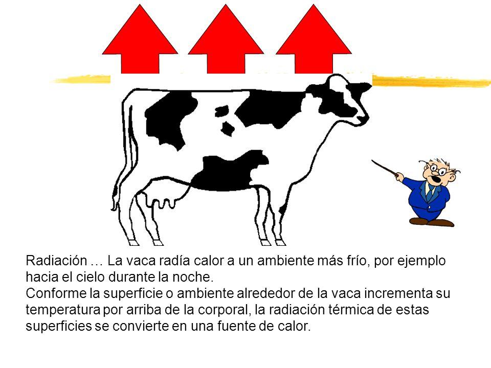 Radiación … La vaca radía calor a un ambiente más frío, por ejemplo hacia el cielo durante la noche. Conforme la superficie o ambiente alrededor de la