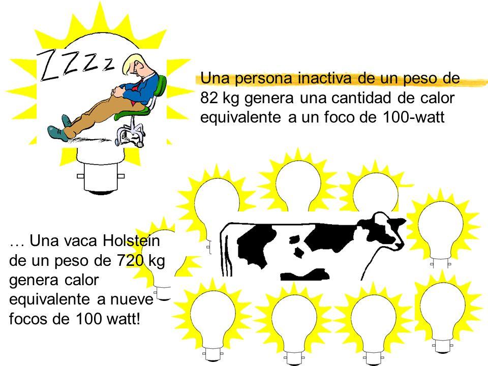 Una persona inactiva de un peso de 82 kg genera una cantidad de calor equivalente a un foco de 100-watt … Una vaca Holstein de un peso de 720 kg gener