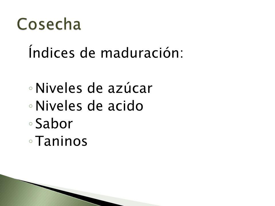 Índices de maduración: Niveles de azúcar Niveles de acido Sabor Taninos