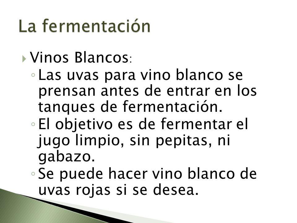 Vinos Blancos : Las uvas para vino blanco se prensan antes de entrar en los tanques de fermentación. El objetivo es de fermentar el jugo limpio, sin p
