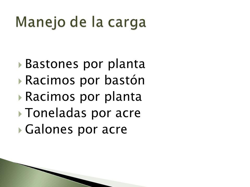 Bastones por planta Racimos por bastón Racimos por planta Toneladas por acre Galones por acre