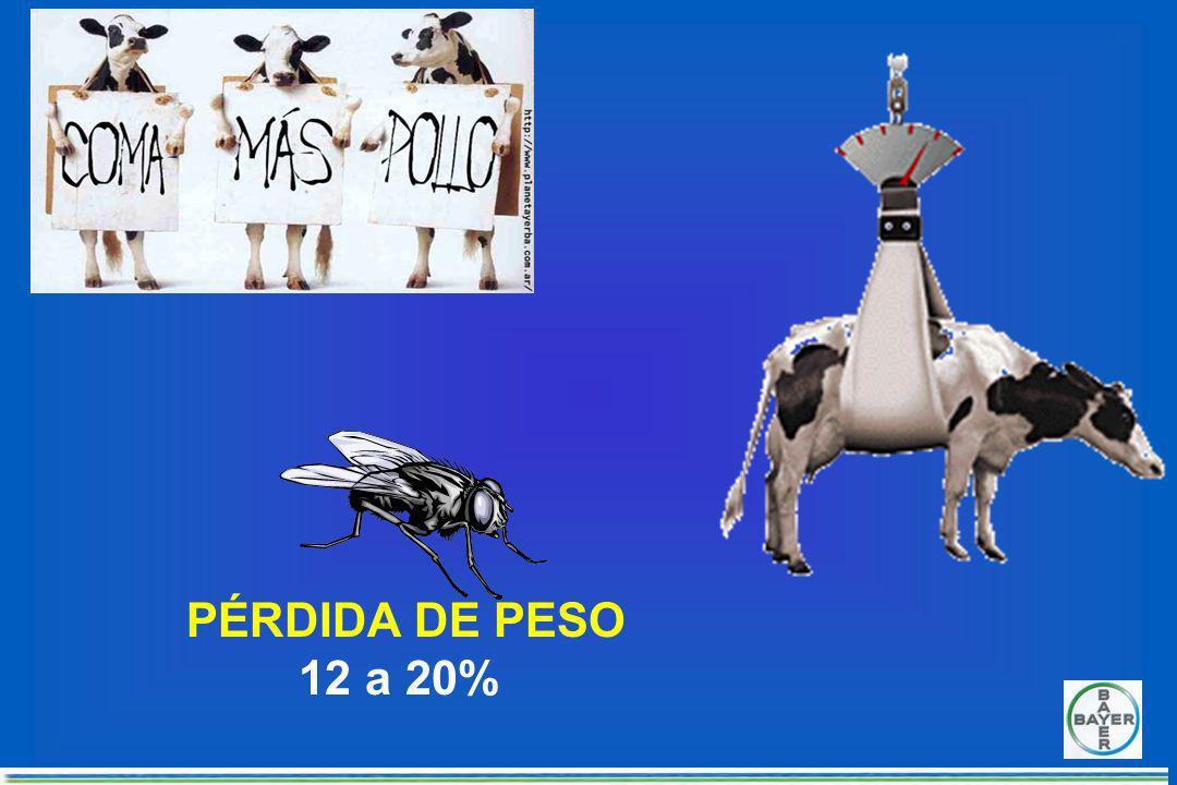 REDUCCION DE PRODUCCION DE LECHE DE 10 A 15 % POR DIA Promedio de producción por dia 20 litros por vaca. Perdida de 2 a 3 litros por vaca por dia. 60