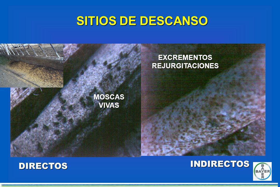 Aplicación de LARVICIDA en estiércol INTERRUPCIÓN DEL CICLO DE VIDA