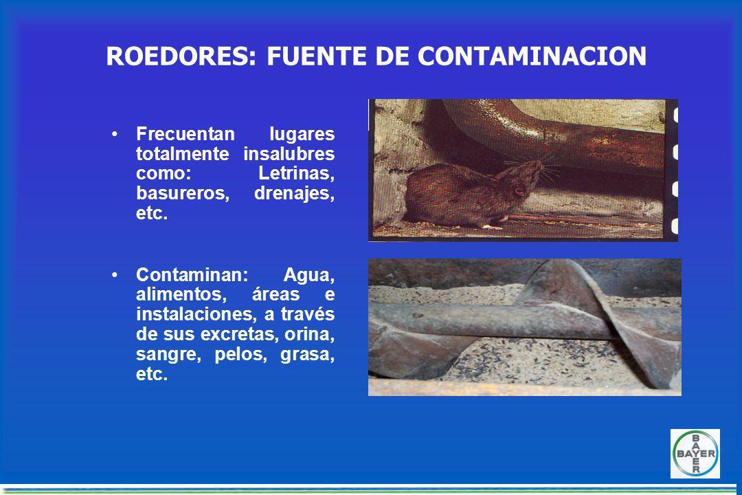 ROEDORESROEDORES Rata joven (Rattus sp) Rata joven (Rattus sp) Ratón casero (Mus musculus) Ratón casero (Mus musculus)