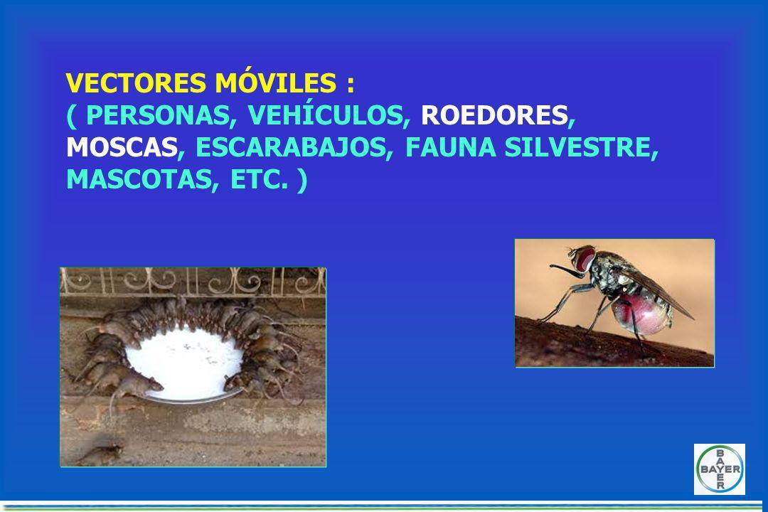 TENGO MUCHAS O POCAS 6 a 10 animales por madrigueras.