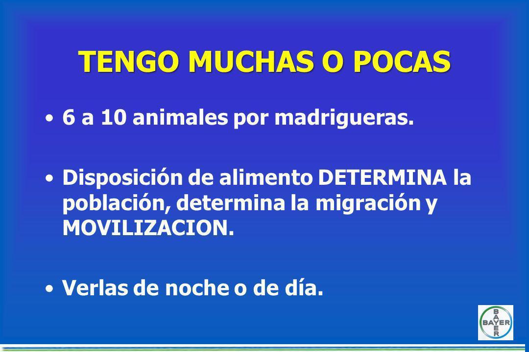 INFESTACION DE RATAS Desperdicio de forrajes: Cada rata adulta consume en promedio 30 gr de alimento diario Una población moderada de 100 individuos c