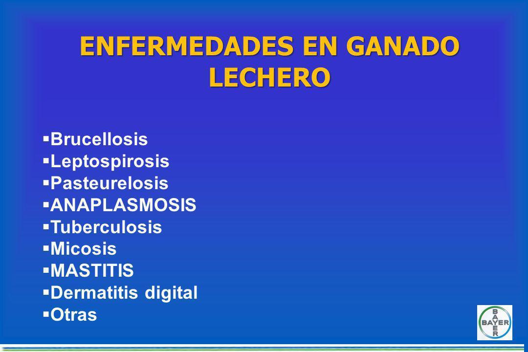 ENFERMEDADES EN GANADO LECHERO Brucellosis Leptospirosis Pasteurelosis ANAPLASMOSIS Tuberculosis Micosis MASTITIS Dermatitis digital Otras